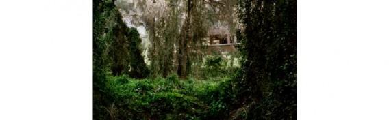 Tropismos. Mati Martí. Territorio Boom