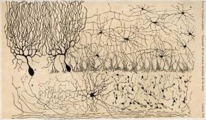 Santiago Ramón y Cajal, 1905